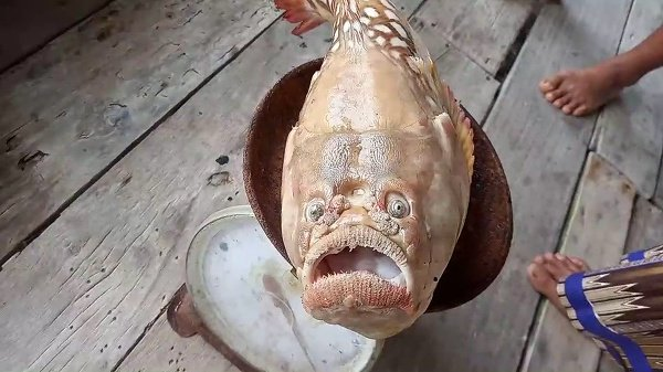 Rybár takmer zahodil sieť