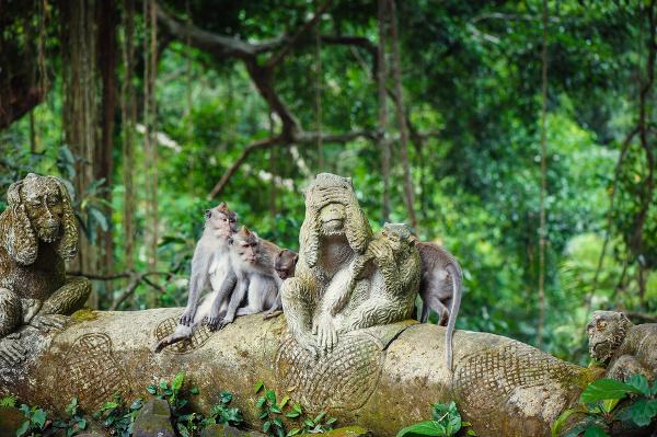 Les opíc Ubud