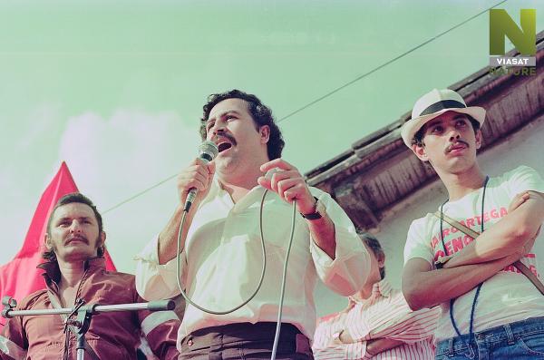 Hon na Escobarove hrochy