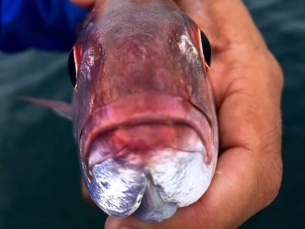 Parazit v rybe
