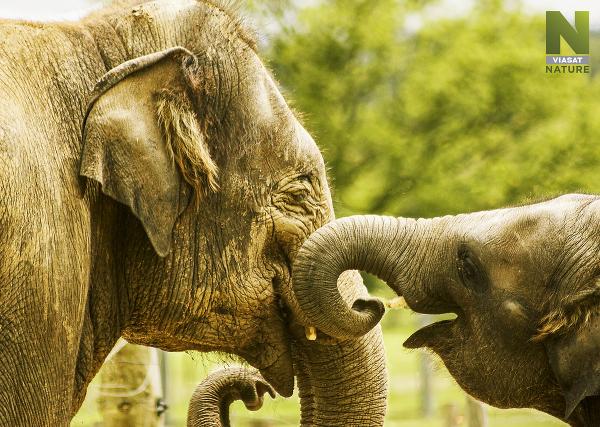 Nemocnica pre slony je