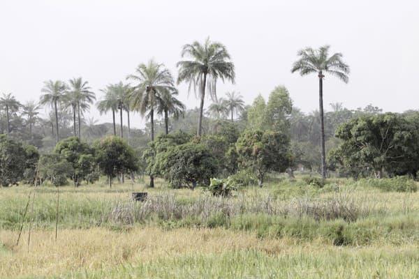 Prírodná rezervácia Abuko