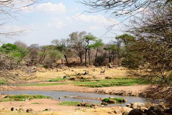Ruaha, Tanzánia