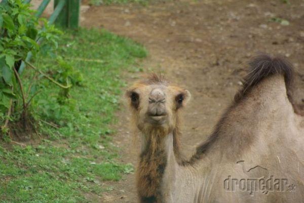 Novinky v košickej zoo