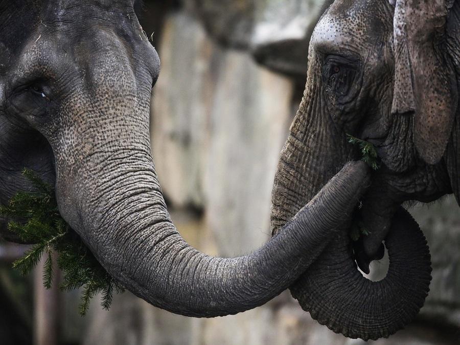 Pohoda na sloní spôsob