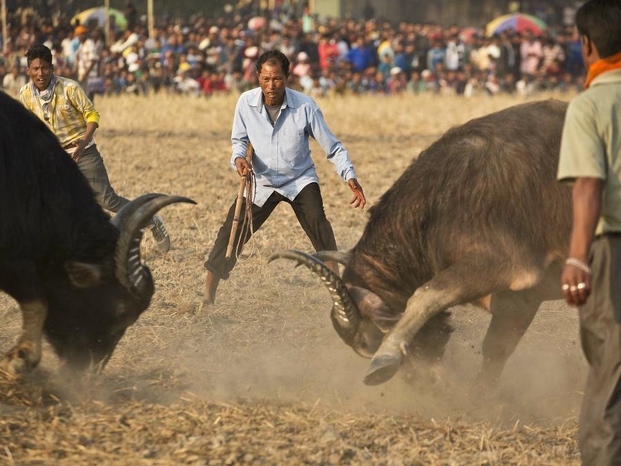 Tak, kde je ten rozzúrený býk?