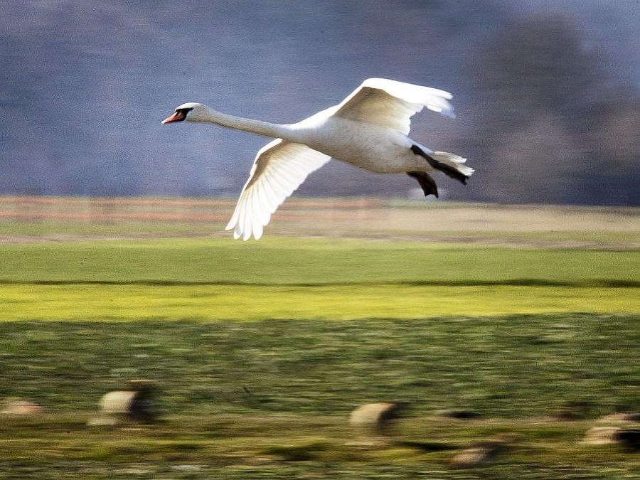Kým máš krídla, tak leť