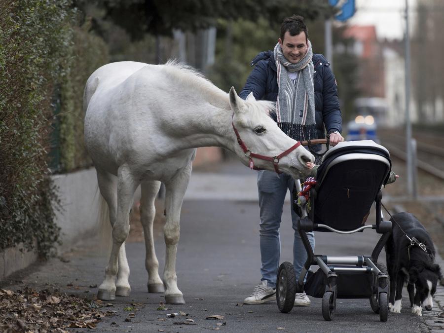 Nemecká kobyla a jej majiteľ