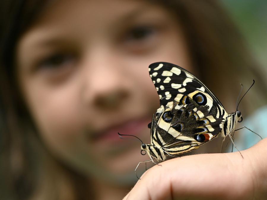 Bojnická expozícia motýľov