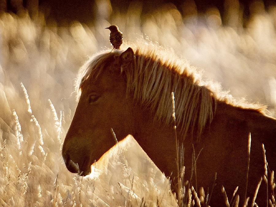 Zvieracie kamarátstvo