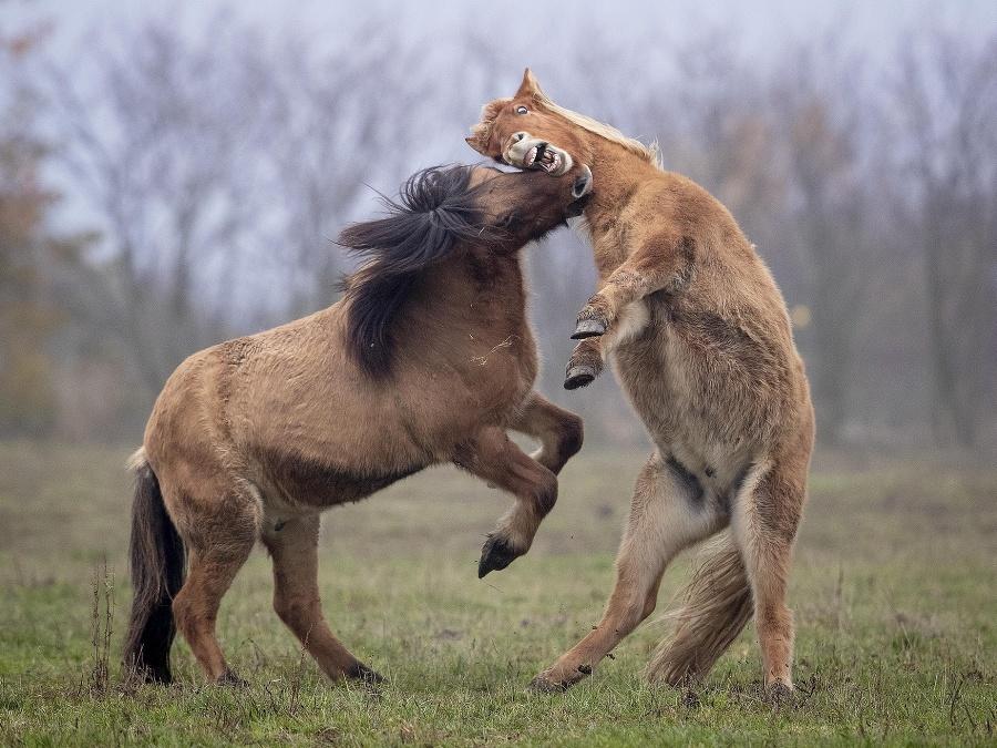 Súrodenecké bitky