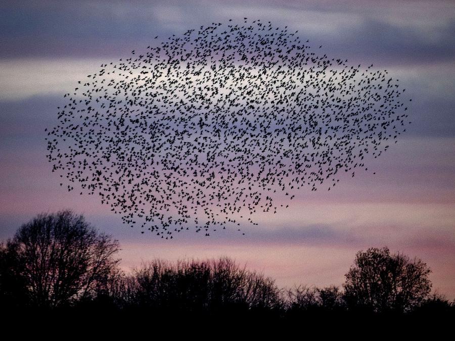 Vtáčí úkaz