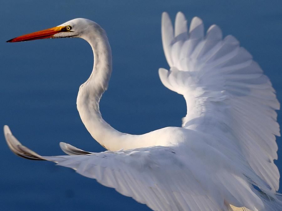 Rozprestri krídla a leť!