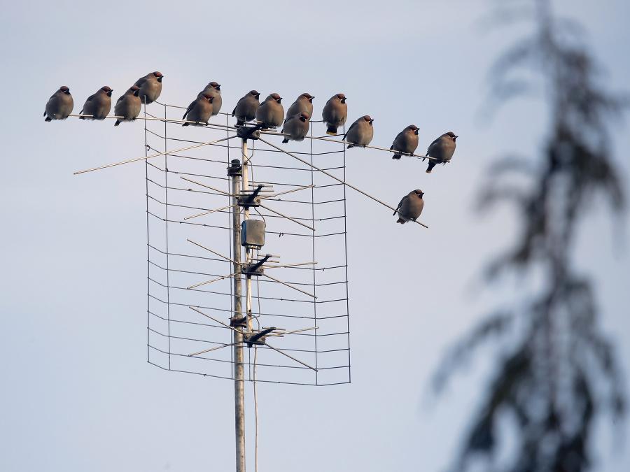 Vtáky na anténe