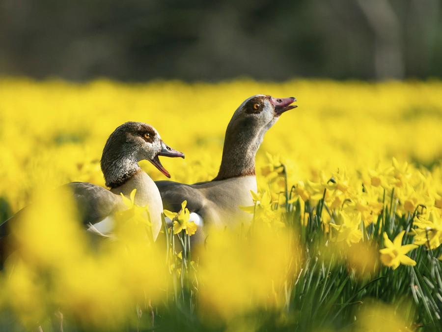 Prichádza jar