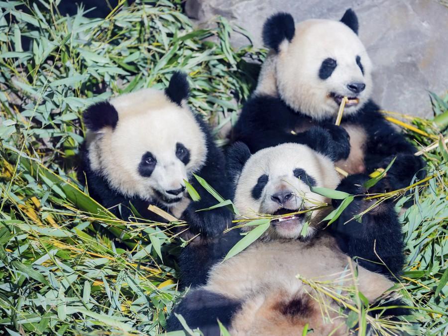 Bambusové hody