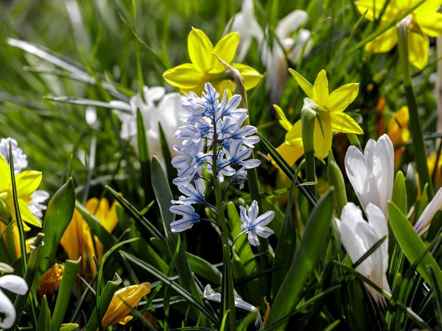 Vôňa jari