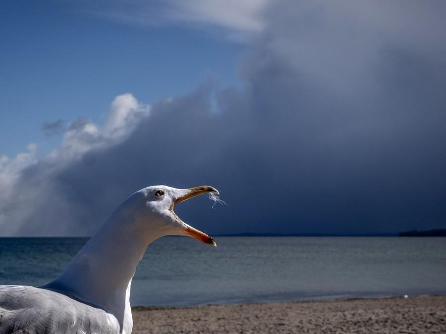 Pozor, ide búrka!