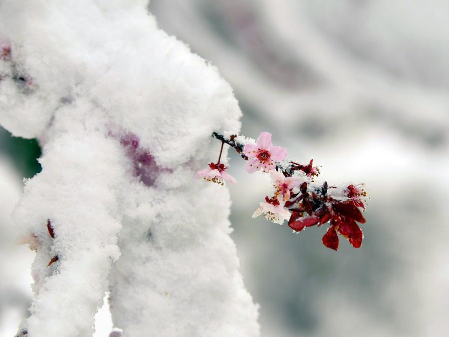 Zasnežená jar