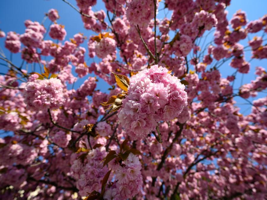 Jarná krása