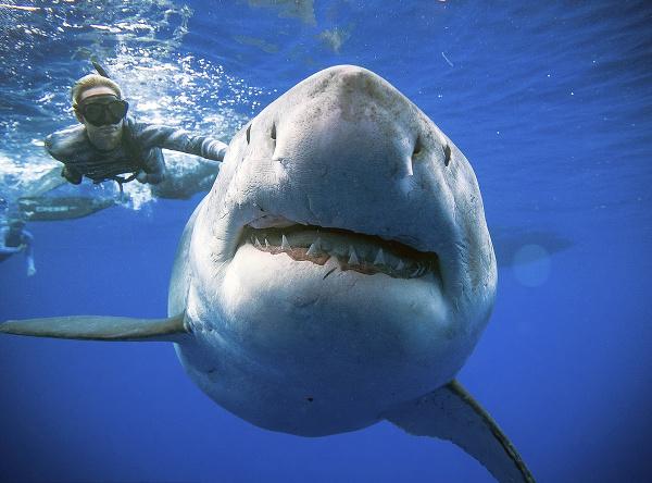 Dobrý deň, pán žralok, hádam ma nespapáte