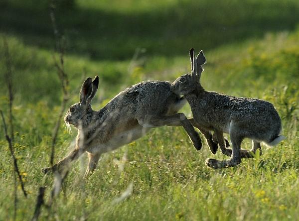 Počkaj, zajac!