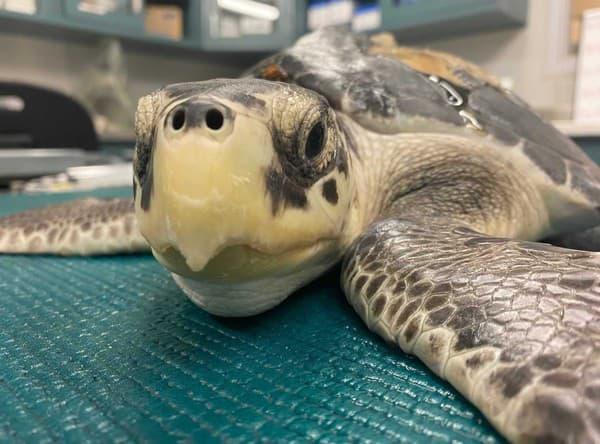 Pohľad korytnačky