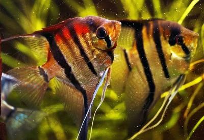 Pestrofarebné rybky