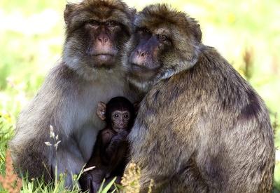 Rodinka makakov