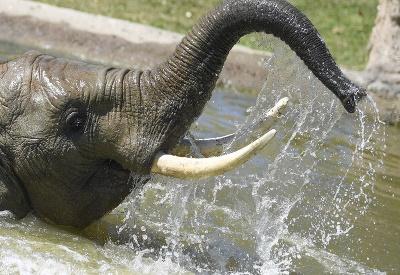 Nemyslite si, že nám sloníkom nie je teplo