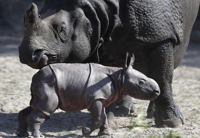Nosorožia rodinka