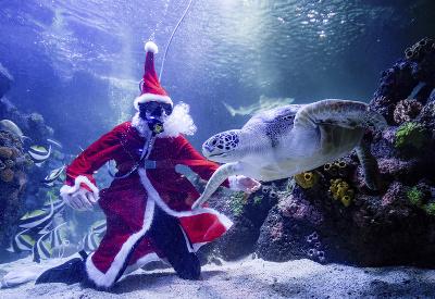 Santa v akváriu