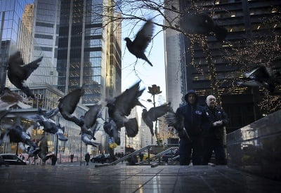 Všade samé holuby