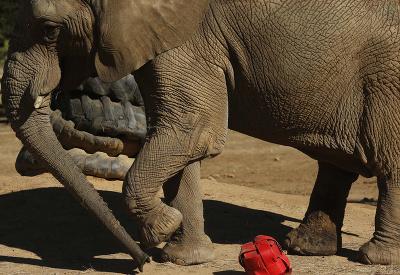 Slon menom Lammie