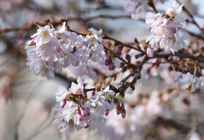 Jar v Trnave