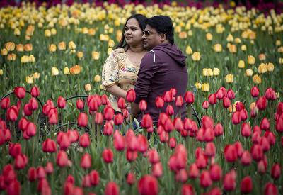 Festival kvetov