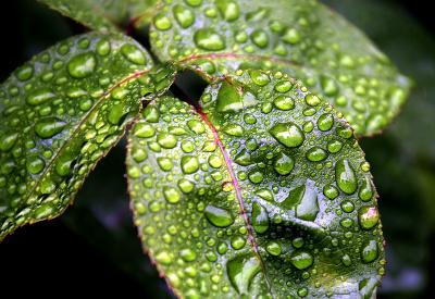 Listy sa tešia z dažďových kvapiek