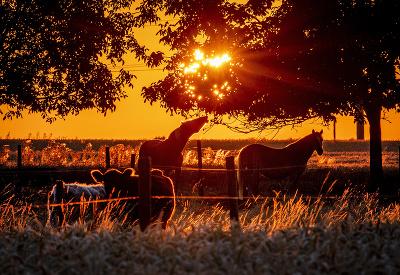 Slnko sa prebúdza do krásneho dňa