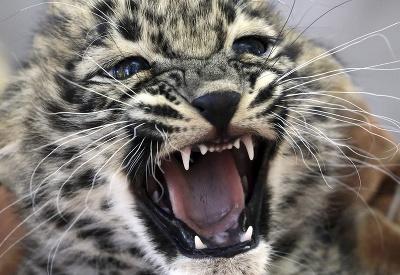 Zjem ťa!