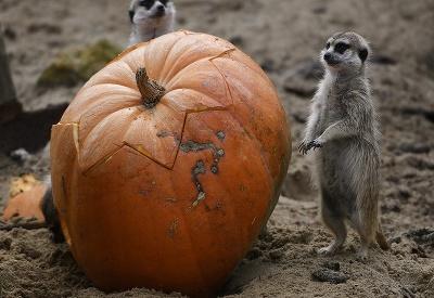 Halloween na zvierací spôsob