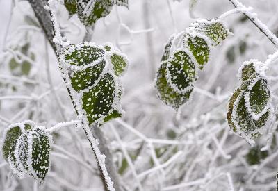 Krása zimy!