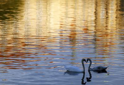 Romantika pri jazere
