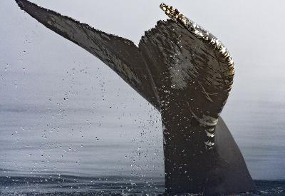 Obor z oceánu