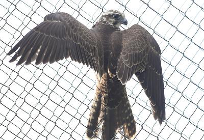 Keď roztiahnem krídla, nikto ma nechytí!