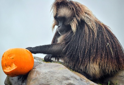 Príprava na Halloween