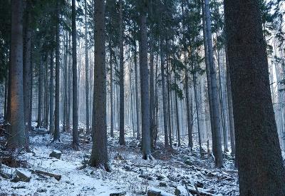 Čistá slovenská príroda