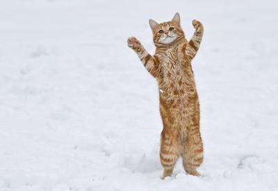 Hurá, sneh!