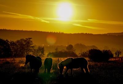 Východ slnka na farme
