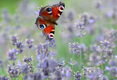 Motýľ na návšteve