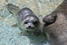 Tulenie mláďa